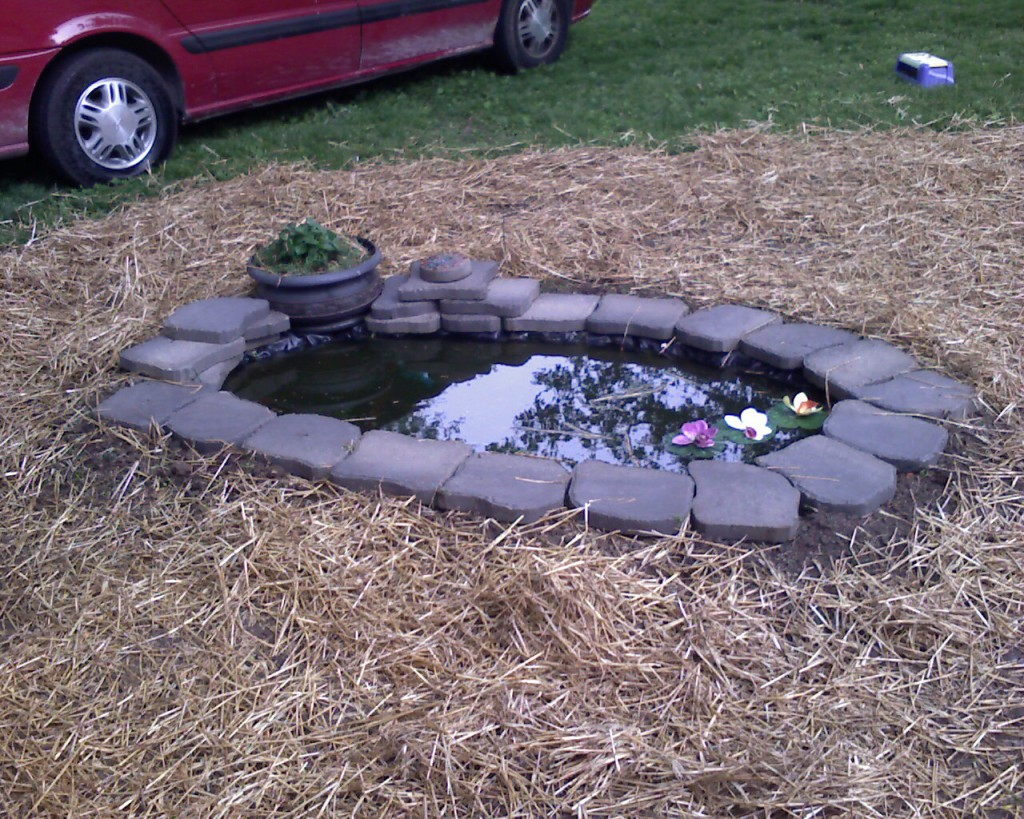 Fish pond creative crafts by alaine for What fish to put in pond